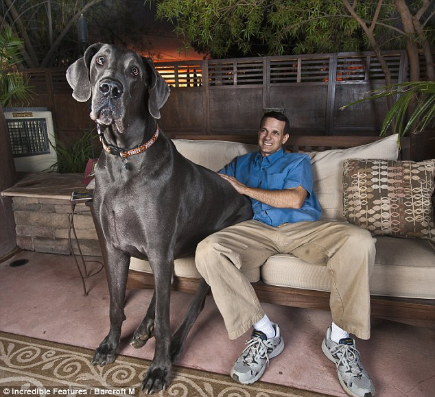 World's Biggest Dog Ever