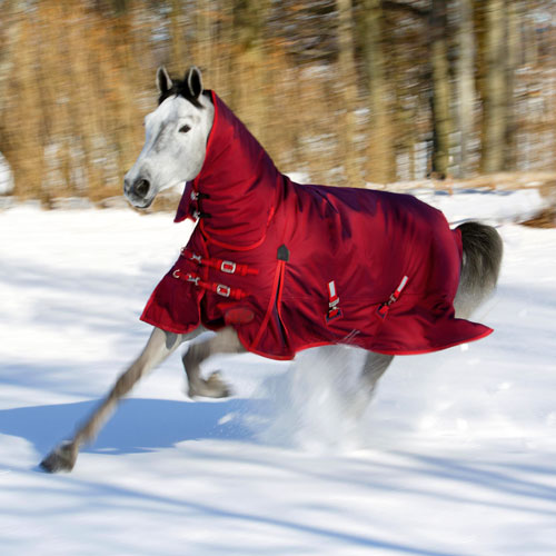 Winter Horse Blankets >> Our Favorite Winter Horse Blankets Dec Blog