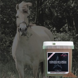 What Is Equine Cushing S Syndrome Dec Blog