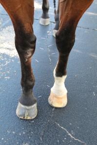 dry needle legs